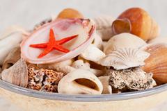 sea shells - stock photo