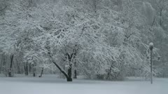 Snowfall in a park Stock Footage