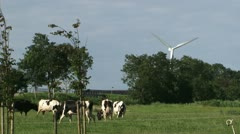 Dairy cow herd and and wind turbine Stock Footage