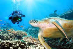 green turtle underwater - stock photo
