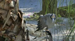Two birds meet and kiss on sandy beach in Florida Stock Footage