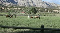 Horses Grazing - stock footage