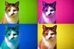 Warhol kissa Kuvituskuvat