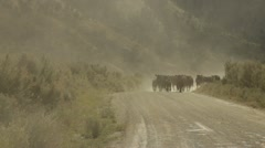 Cattle Drive Stock Footage