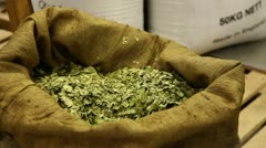 Hops being inspected Stock Footage