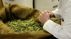 Brewer inspecting hops Stock Footage