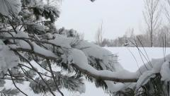 Snow covered pine tree branches Stock Footage