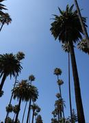 Palm trees of beverly hills Stock Photos