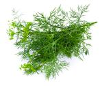 Stock Photo of dill on a white background