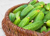 Stock Photo of basket  filled by cucumbers