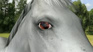 Stock Video Footage of Equine recurrent uveitis Part3