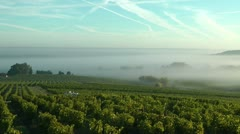 Timelapse fog over vineyards Stock Footage