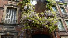 Wisteria on French provincial flats Stock Photos