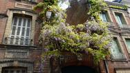 Stock Photo of Wisteria on French provincial flats