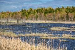 Northern swamp Stock Photos