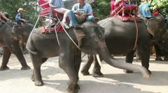 Riding Elephants - stock footage