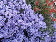 Stock Photo of Autumn Flowers