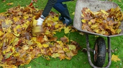 Woman hand raker rubber boots load barrow autumn leaves garden Stock Footage