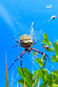 Spider. summer.  sky.  web.  herb. Stock Photos