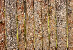 Fence from slab pines Stock Photos