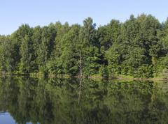 Timber lake.  calm.  reflection wood. - stock photo