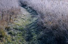 Path in the field in the late fall Stock Photos