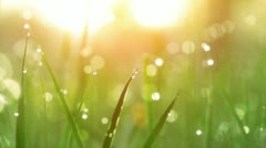 Dew Drops on Green Grass. Shot With Slider. Stock Footage