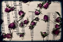 Music notes with the dry rosebuds Stock Photos