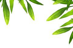 beautiful bamboo leaves border on white - stock photo