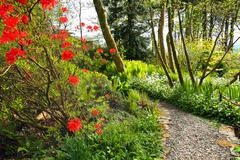 Beautiful spring garden with red azalea and cobblestones path Stock Photos