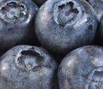Stock Photo of Blueberries
