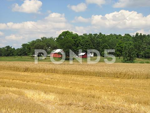 Stock photo of Peaceful Farmland