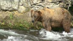 BROWN BEAR MOVES IN WATER Stock Footage