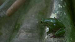 Tree frog jumping Stock Footage