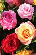 multicolored roses in flower arrangement - stock photo
