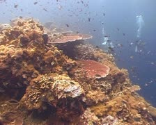 Colorful coral reef dolly shot - stock footage