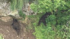 BROWN BEAR CUBS SLIP AND SLIDE Stock Footage