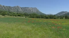 Alpine meadow with poppies blooming in French Alps - pan Stock Footage