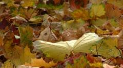 Autumn season Stock Footage