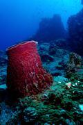 barrelsponge at tokong laut, perhentians, malaysia - stock photo