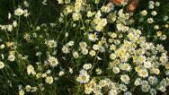 Couple among flowers Stock Footage