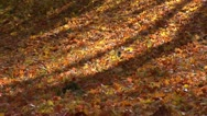 Autumn-fall-leaves Stock Footage