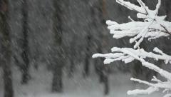 Snowfall in the forest. Changing focus from background to foreground. Stock Footage