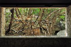 conservation - stock photo