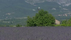 Steel windmill behind lavender field, Puimoisson Stock Footage