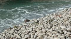 Sea washes pebbles zoom audio Stock Footage