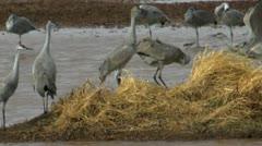 Birds Fight Stock Footage