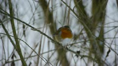 Robin in winter Stock Footage