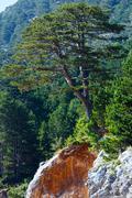 Summer  llogara pass (albania) Stock Photos