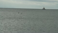 Birds on patagonian harbour Stock Footage
